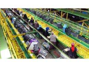 Limon İhracatında Çiftçiyi Sevindiren Karar