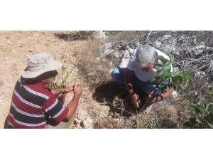 Bozyazı'da Çiftçilere Uygulamalı Bilgilendirme