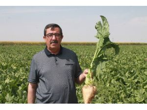 """Ahmet Bestil: """"Şeker Fabrikaları Yaşatılmalı"""""""
