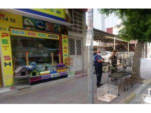 Akdeniz İlçesinde Pet Shoplar Denetlendi