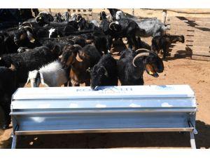 Konyaaltı'ndan  hayvan yetiştiricilerine aşı, ilaçlama ve otomatik yemlik desteği