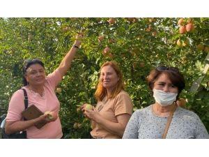 Rus Turistler Eğirdir'de Elma Hasadı Turuna Katıldı