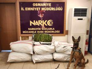 Osmaniye'de Tır Dorsesinde 135 Kilo Esrar Ele Geçirildi