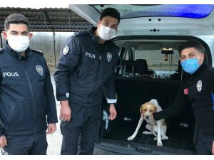 Köpeğe İşkence Görüntüleriyle İlgili 1 Gözaltı