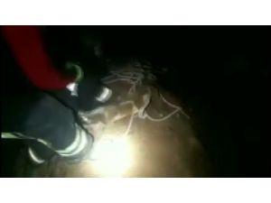 Çukura Düşen Köpeği İtfaiye Ekipleri Kurtardı