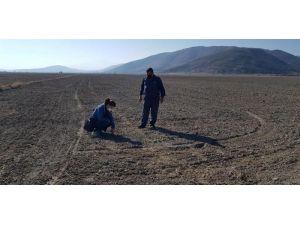 Isparta'da Yerli Tohum Denemeleri