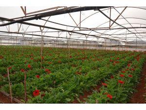 Kepez'de sera atıkları organik gübreye dönüştürülüyor
