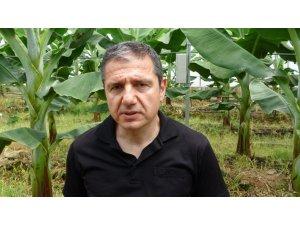 """Prof. Dr. Sert: """"Muz seraları toprağı verimsizleştirip yer altı sularımızı tüketiyor"""""""
