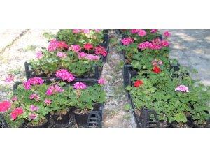 Çankaya'da Çiçek Satışına Büyük İlgi