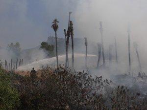 Kemer'da çöp yangını palmiye ağaçlarını kül etti
