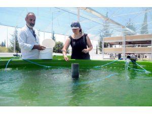 AÜ'den çevreyle dost, balık ve sebze üretimi