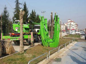 Ağaçlar zarar görmeden taşındı
