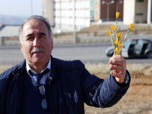 Yozgat'ta Baharın Müjdecisi Çiğdem Çiçekleri Açtı