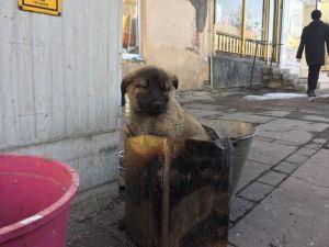 Soba Közünde Isınan Yavru Köpeğe Şefkat Eli