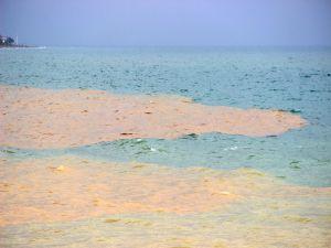 Deniz İki Renge Büründü