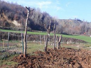 Belediyeden Ağaç Katliamı İddialarına Cevap