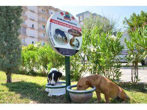 Sokak hayvanlarına beslenme noktası