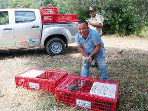Manavgat'ta doğaya keklik salındı