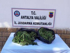Antalya'da 10 kilogram esrar ele geçirildi
