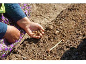 OGM'den salep eylem planı