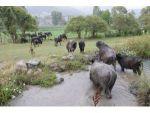 Köylünün Hayatı Mandayla Değişiyor
