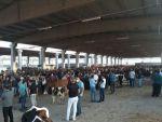 Kahramanmaraş Canlı Hayvan Borsası Kurban Bayramı'na Hazır