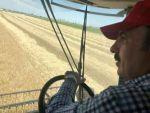 Başkan Altay, Altınekin'de Çiftçilerin Hasadına Eşlik Etti