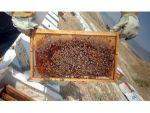 Arıcıları Önce Kuraklık Sonra Bilinçsiz Kullanılan Tarım İlaçları Vurdu