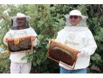 Mersin'de Arıların Organik Bal Mesaisi