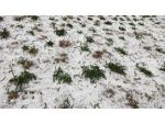Şiddetli Dolu, Tarsus'ta 610 Dekarlık Tarım Arazisine Zarar Verdi