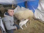 Baharın Müjdecisi Olan Kuzular Doğmaya Başladı