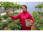 Girişimci Kadın Topraksız Tarımla Çilek Üretti