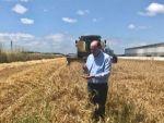 Adana'da Buğdayda 778 Bin Ton Rekolte Bekleniyor