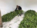 Kaybolmaya Yüz Tutmuş İpek Böceği Yetiştiriciliği Nallıhan'da Hayat Buluyor