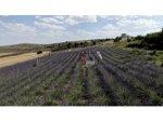 Fransa'dan Gelirken Getirdiği 1 Avuç Tohumla Kendi İşini Kurdu