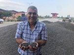 Çukurova'da Ayçiçek Tarlasında Çifte Bayram