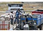 Türkiye'deki Buğday Ve Arpa Açığını Bu Yıl Başkentli Çiftçi Kapatacak