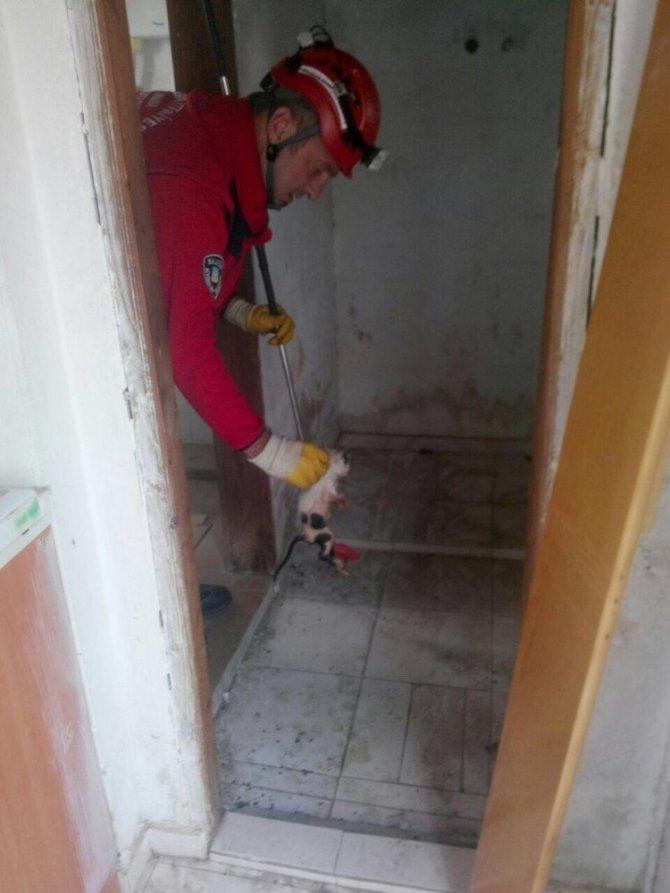 Tuvalet deliğine düşen kedileri itfaiye ekipleri kurtardı