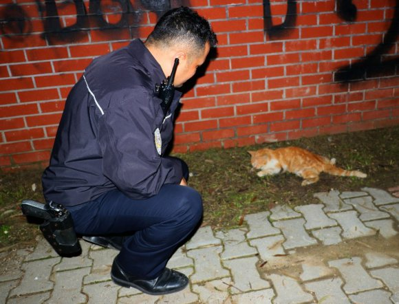 Sürücünün Çarpıp Kaçtığı Yaralı Kedinin Yardımına Vatandaş İle Polis Koştu