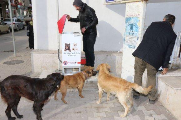Bafra Belediyesi Sokak Hayvanlarına Sahip Çıkıyor