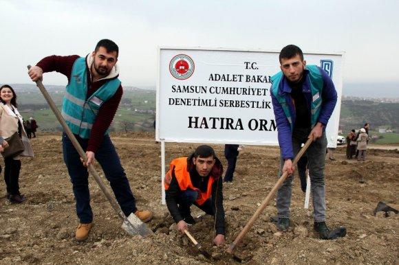 Samsun'da Hükümlüler Fidan Dikti