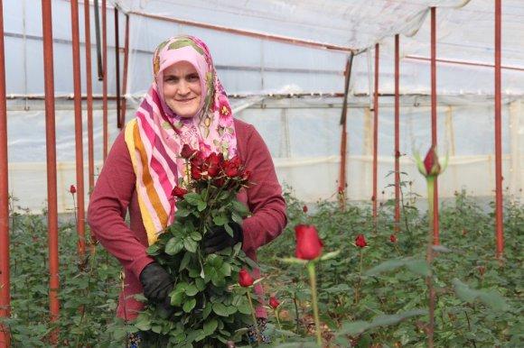 Sevgililer Günü İçin 45 Milyonluk Çiçek İhracatı