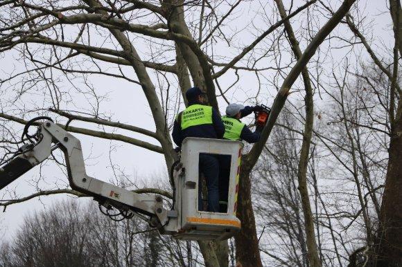 Arıtma tesisi içinde bulunan 300 yıllık çınar ağacı korumaya alındı