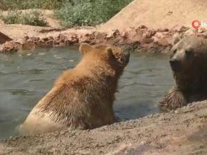 Sıcaktan bunalan hayvanlara buzlu meyve kokteylli serinlik