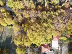 Antalyada renklerin sonbahar dansı