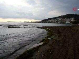Antalyada ölü balıklar sahile vurdu