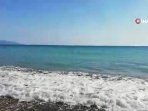 Sahile vuran dev Gagalı Balinanın yardımına Sahil Güvenlik ekipleri koştu