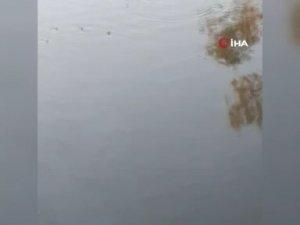 Nifrit Deresi'nde balıklar kirlilikten oksijensiz kaldı