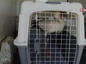 Yavru leylek tedavi edilerek doğaya bırakıldı