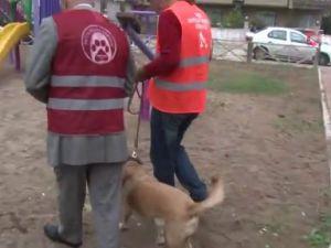 Patileri kesilen köpeği öldüreni ihbar edene para ödülü